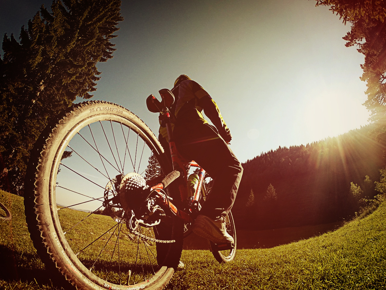 cyclist pictured on grass